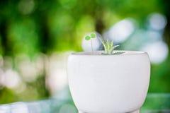 Albero in vaso decorativo Fotografia Stock Libera da Diritti