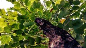 Albero verdastro dopo pioggia Immagine Stock