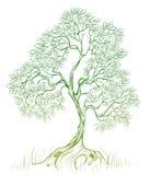 Albero verde Fotografia Stock