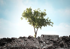 Albero verde Fotografie Stock Libere da Diritti