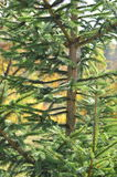 Albero verde fotografie stock