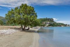 Albero verde alla spiaggia di Keriou, Zacinto, Grecia Immagine Stock Libera da Diritti