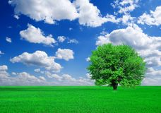 Albero verde in campi Fotografia Stock