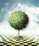 Albero verde, cielo blu con le nuvole e pavimento della scacchiera Fotografie Stock