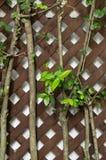 Albero verde con l'incrocio di legno marrone Fotografia Stock Libera da Diritti