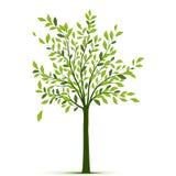 Albero verde con le foglie su fondo bianco Immagini Stock Libere da Diritti