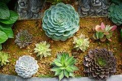 albero verde del cactus Fotografie Stock