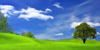 albero verde del campo fotografia stock