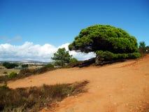 Albero verde in deserto Immagini Stock Libere da Diritti
