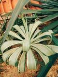 Albero verde in deserto fotografie stock