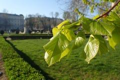 Albero verde dietro i monumenti storici Fotografie Stock