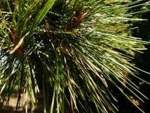 Albero verde intorno all'anno Immagini Stock