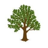 Albero verde isolato su priorità bassa bianca illustrazione vettoriale