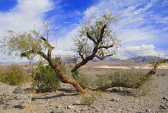 Albero verde nel parco nazionale in California, U.S.A. Fotografia Stock Libera da Diritti