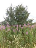 Albero verde sopra al prato Fotografie Stock