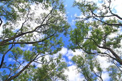 Albero verde sotto cielo blu fotografia stock