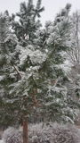 Albero verde sotto la neve Immagini Stock