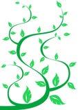 Albero verde su bianco Fotografie Stock
