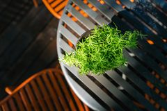 Albero verde sul piccolo vaso decorato sulla tavola all'aperto Fotografia Stock