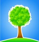 Albero verde sul prato verde Immagini Stock