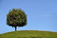Albero verde sulla cima della collina Fotografia Stock