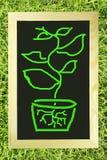 Albero verde sulla lavagna Fotografia Stock
