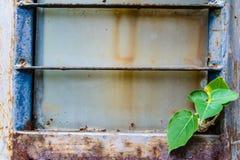 Albero verde sulla vecchia parete d'acciaio Fotografia Stock Libera da Diritti