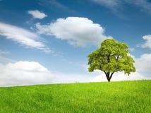 Albero verde in un campo immagini stock