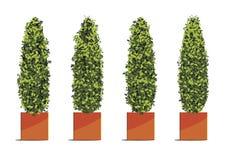 Albero verde in vasi del cubo isolati su fondo bianco Ill di vettore Illustrazione Vettoriale