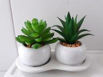 Albero verde in vaso bianco fotografia stock