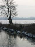 Albero vicino al fiume di Rhin Immagini Stock Libere da Diritti