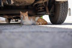 Alberobello. Cat under a car on a sunny day Royalty Free Stock Photos