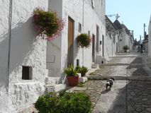 Alberobello's road among trulli. A road of Trulli, the traditional house of the farmers of Alberobello, southern Italy royalty free stock images