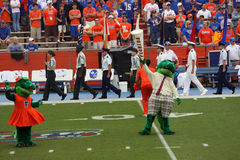 Albert the Alligator impersonating Mr. Two Bits. The Swamp, Gator Country. University of Florida Gainesville FL Stock Photo