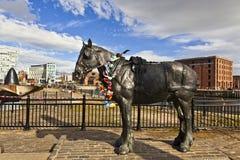 Albert, animal, carters, centre, ville, dock, docks, équins, harnais, transport, héritage, histoire, cheval, puissance en chevaux Photos stock