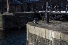 Albert Dock é um complexo de construções e de armazéns da doca em Liverpool, Inglaterra Fotografia de Stock Royalty Free