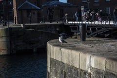 Albert Dock é um complexo de construções e de armazéns da doca em Liverpool, Inglaterra Fotos de Stock Royalty Free