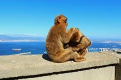 Albert Od Gibraltar herum Lizenzfreie Stockfotografie