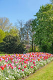 Albert Park with Tulips Royalty Free Stock Image