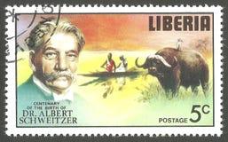 Albert Schweitzer, búfalo africano Imágenes de archivo libres de regalías