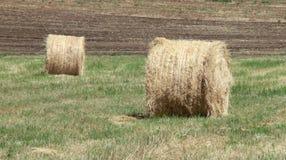 alberta тюкует временя прерии ландшафта сена полей сельское Стоковые Фото