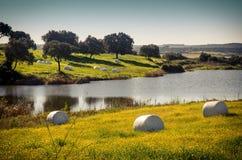 alberta тюкует временя прерии ландшафта сена полей сельское Стоковые Изображения RF