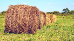 alberta тюкует временя прерии ландшафта сена полей сельское Стоковая Фотография
