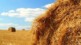 alberta тюкует временя прерии ландшафта сена полей сельское Стоковое фото RF