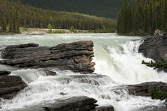 alberta athabaska kanadyjscy spadek Rockies Obraz Stock