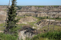 Alberta badlands Royalty Free Stock Images