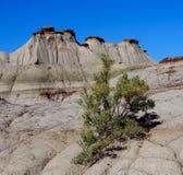 Alberta Badlands Landscape Arkivbild