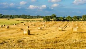 alberta baler fields lantlig sommartid för höliggandeprärie Arkivbilder