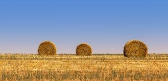 alberta baler fields lantlig sommartid för höliggandeprärie Arkivbild