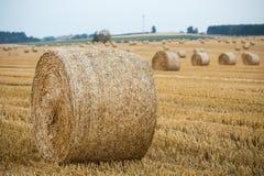 alberta baler fields lantlig sommartid för höliggandeprärie Royaltyfri Foto